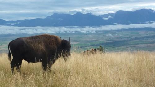 , Bison Range, Sept. 2010 123