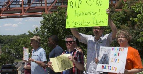 harambe-protest