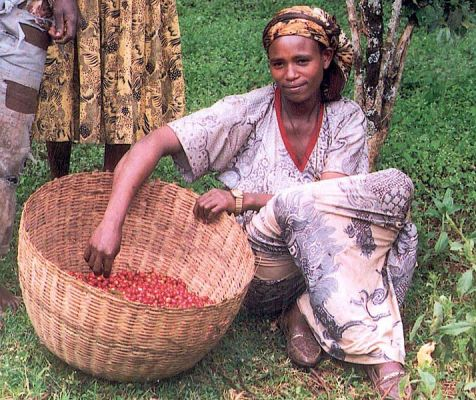 female_coffee_farmer_in_ethiopia_5762538117