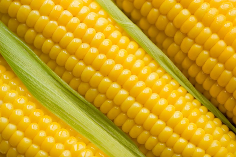 Maize abagond maize voltagebd Image collections