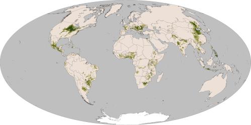 world-maize-map